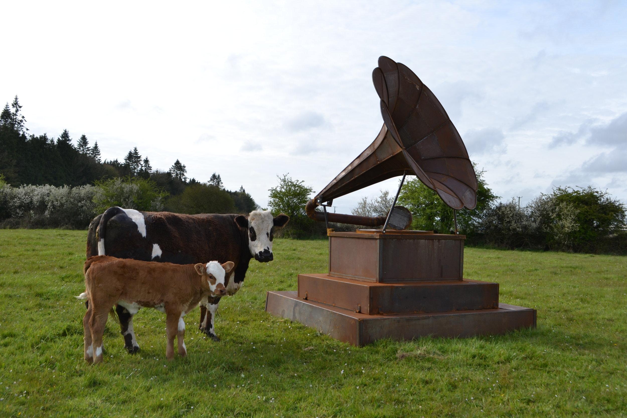 Donnacha Cahill's Gramophone 2.jpg