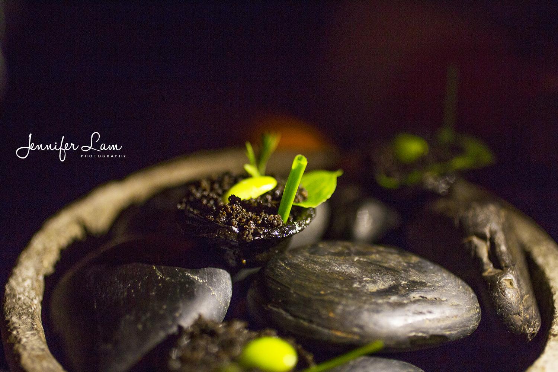 Sydney Food Photographer - Jennifer Lam Photography (2).jpg
