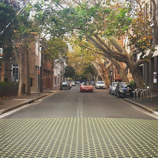 This road is shaded 64% and is often 10 degrees cooler than the ambient temperature! #coolcities #streetcoolers #green #sydney #trees #potd #sustainability #cool #beautiful
