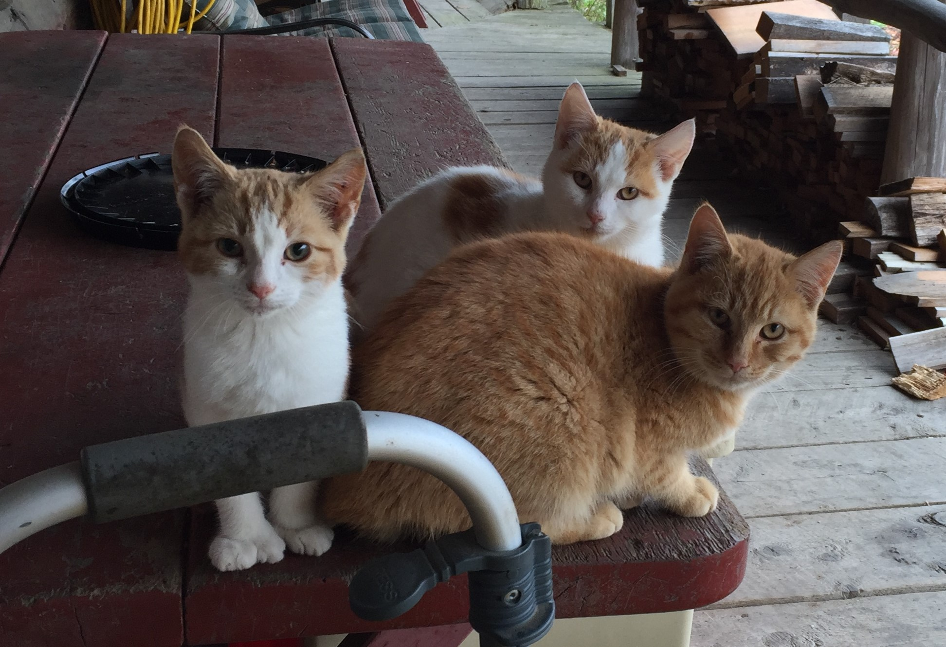 From right to left: Larry, Moe and Curly