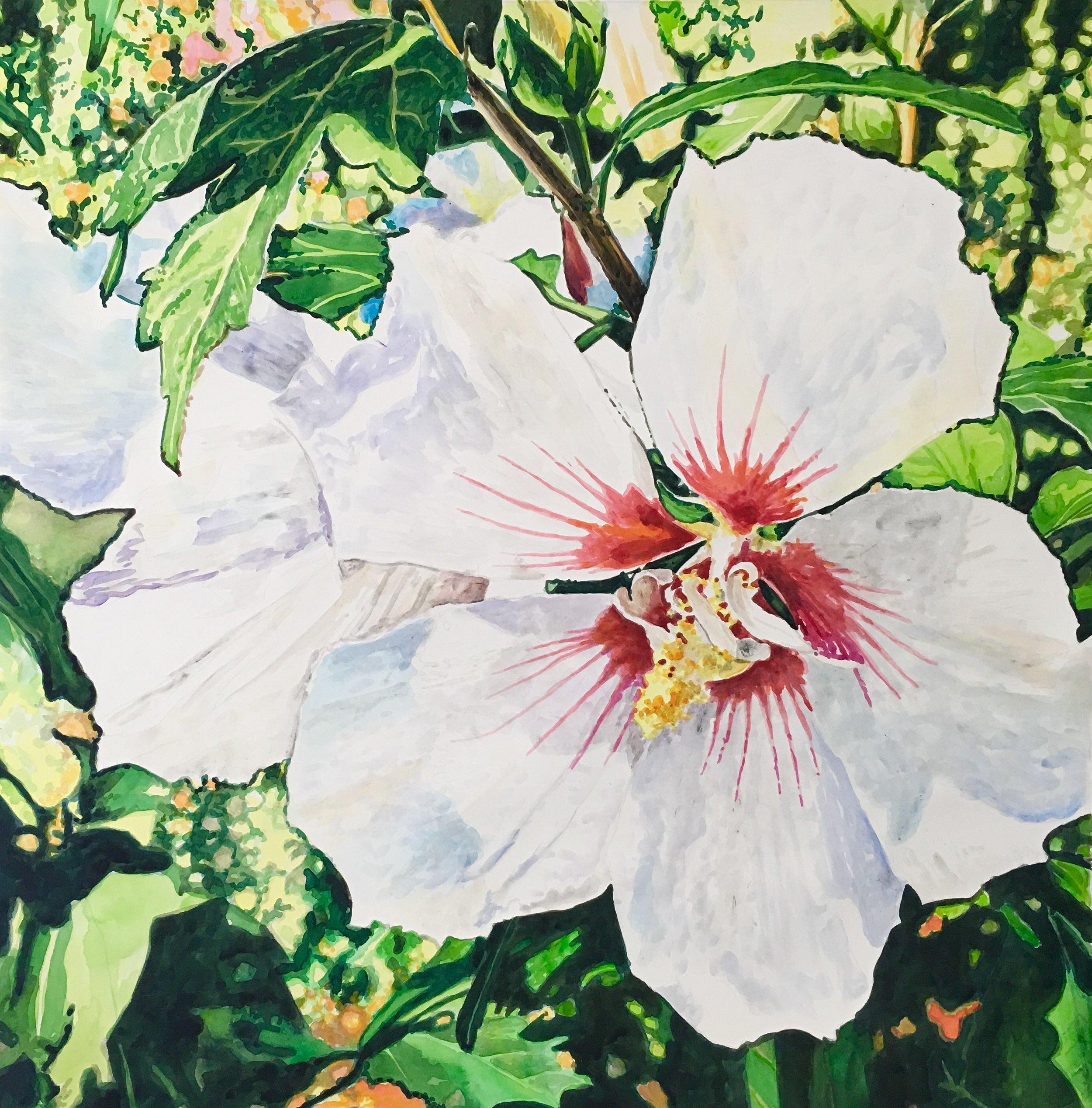 """""""Sybil's Althea""""   36 x 36 inches   watercolor"""