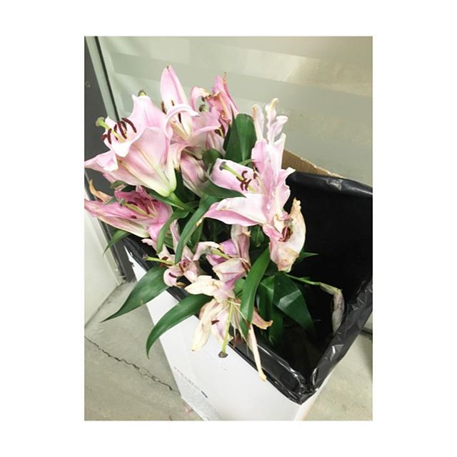 Sad lilies