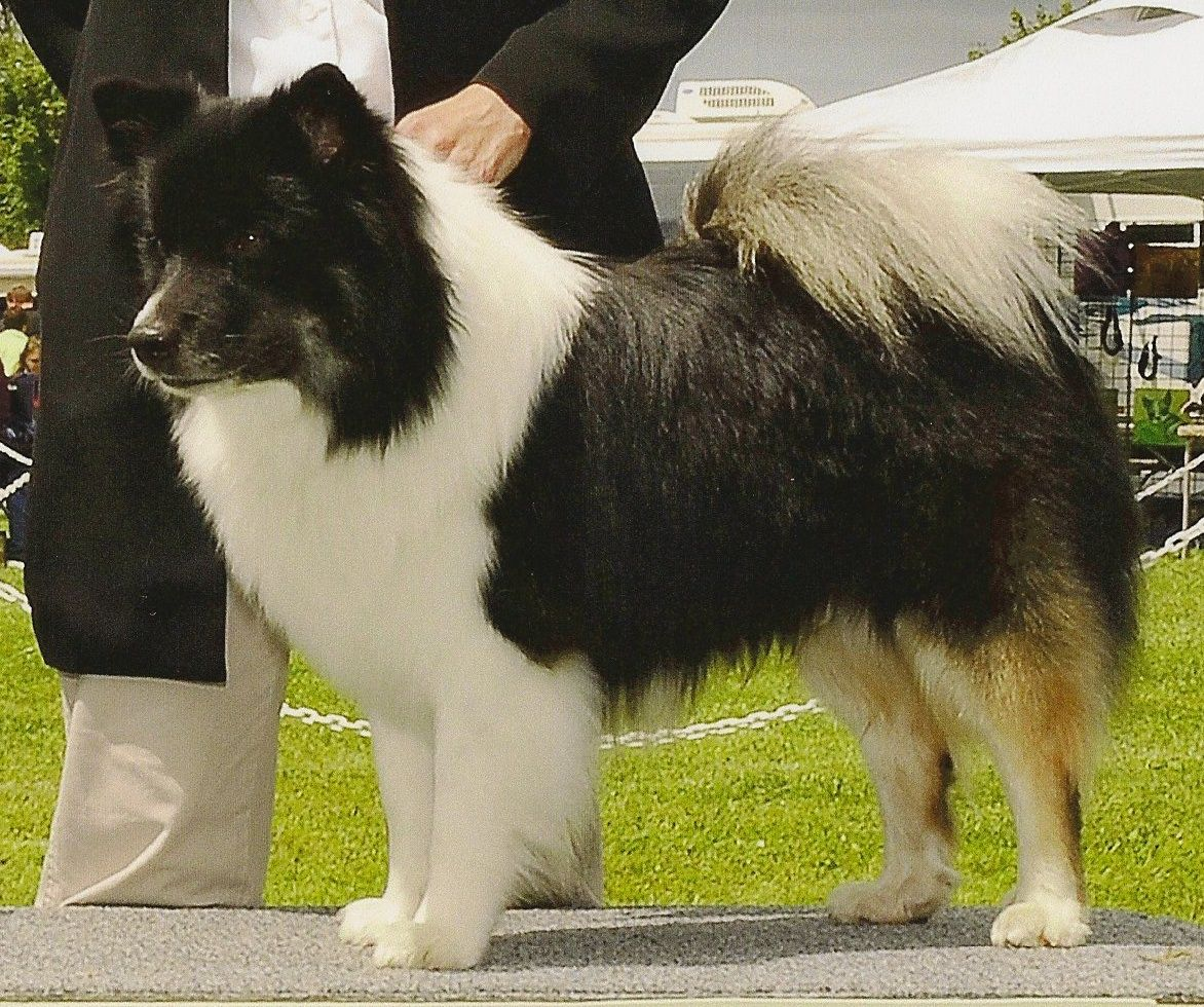 Tenzing Only 1st AKC Group July 2010.jpg