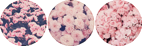 rose_struck_circle_divider_by_cal_vain-daknzep.png