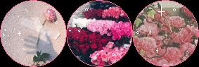 roses_divider_by_starrywave-dahayqo.png
