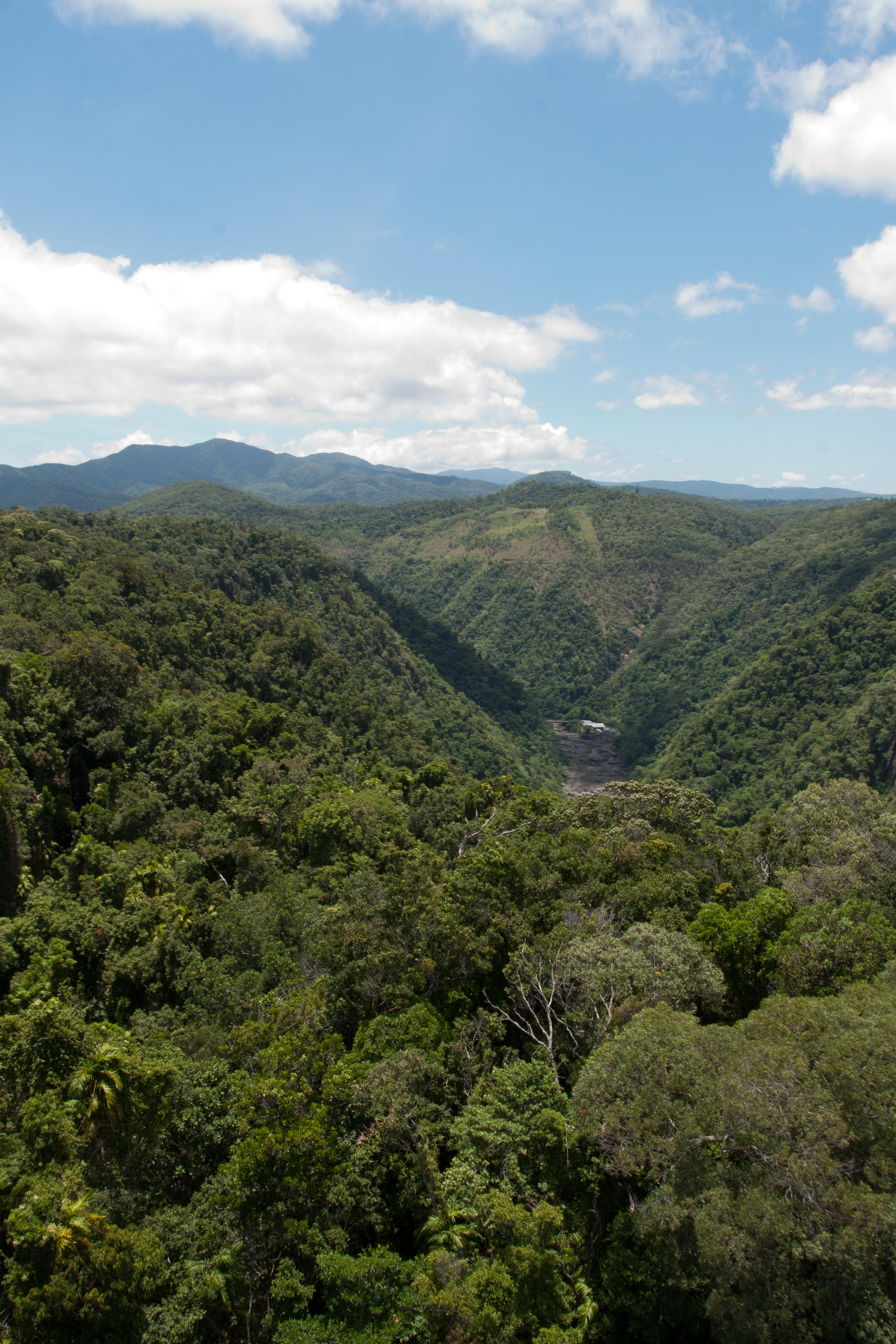 Forest cover on the Blue Mountains outside Sydney, Australia.