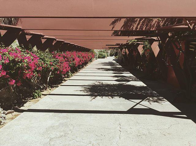 #perspective #franklloydwright #taliesinwest