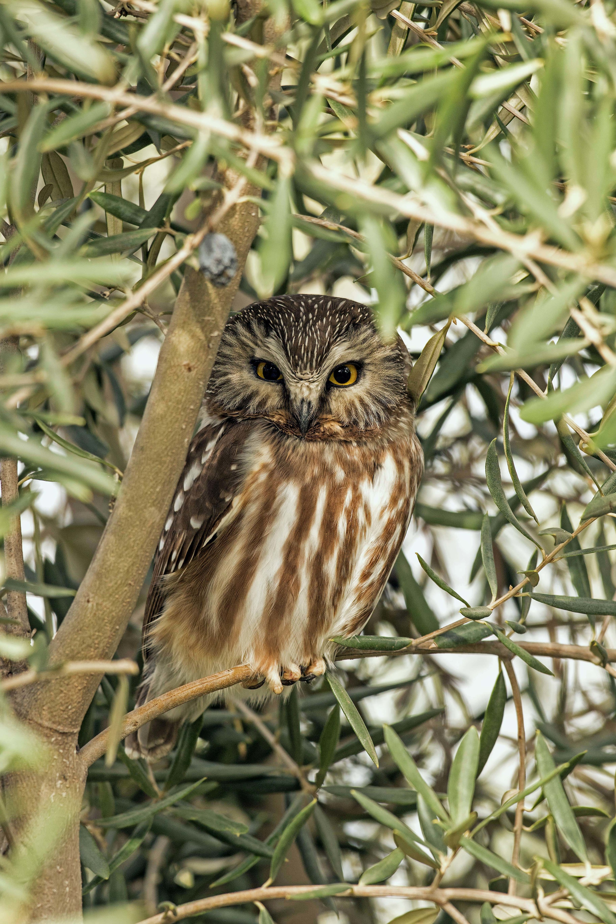 Owl photo from Manfred.jpeg