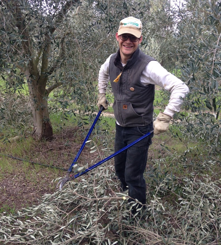 Colin pruning the Frantoio's on a chilly March morning.