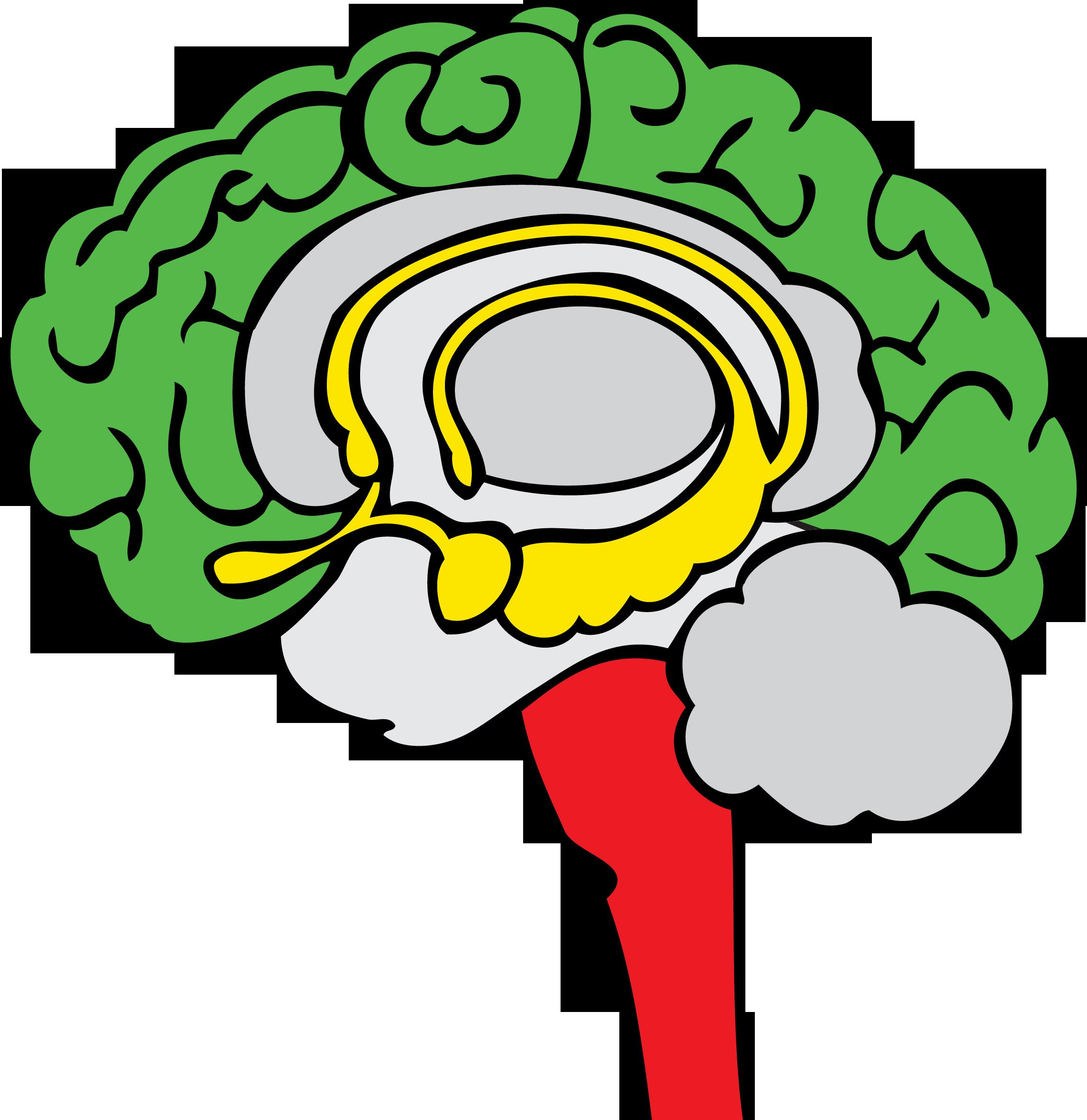 The three basic regions of the brain: the Neocortex  (Green Brain) , the Limbic System  (Yellow Brain) , and the Brain Stem  (Red Brain) .