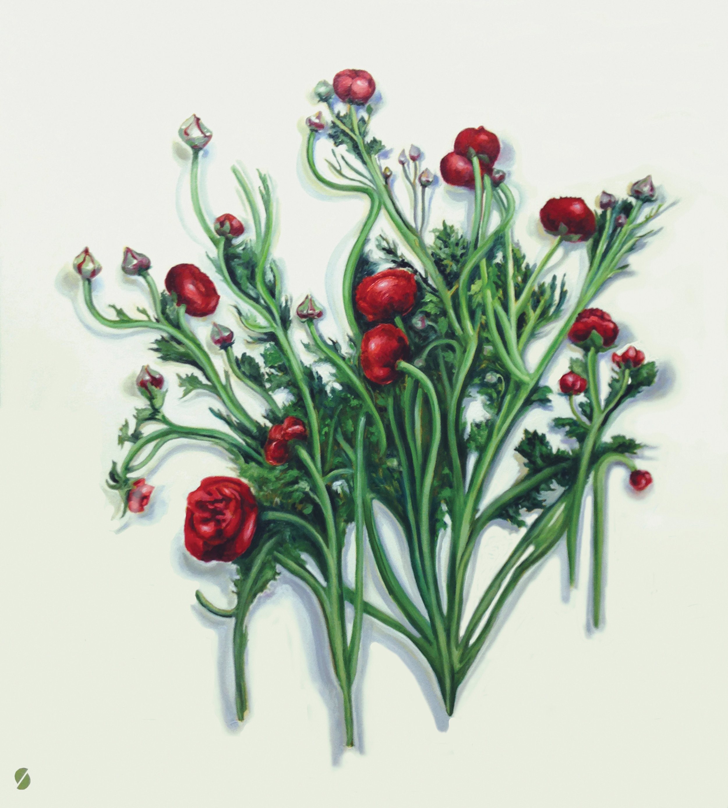 Medusa Ranunculus, 2014, oil on canvas, 44.25 x 40.25 inches. Private Collection