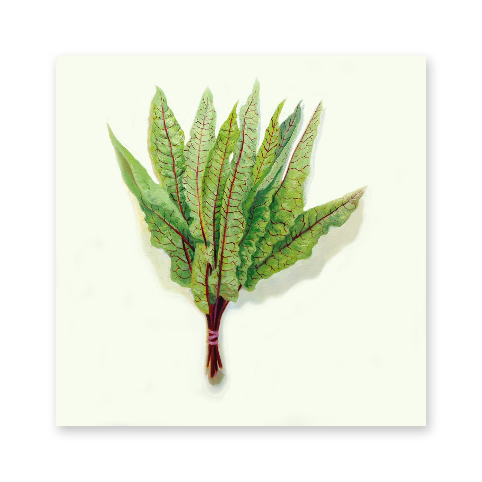 Red Vein Sorrel , 2018, oil on canvas, 30 inches square, Collection: Capital One, Delaware
