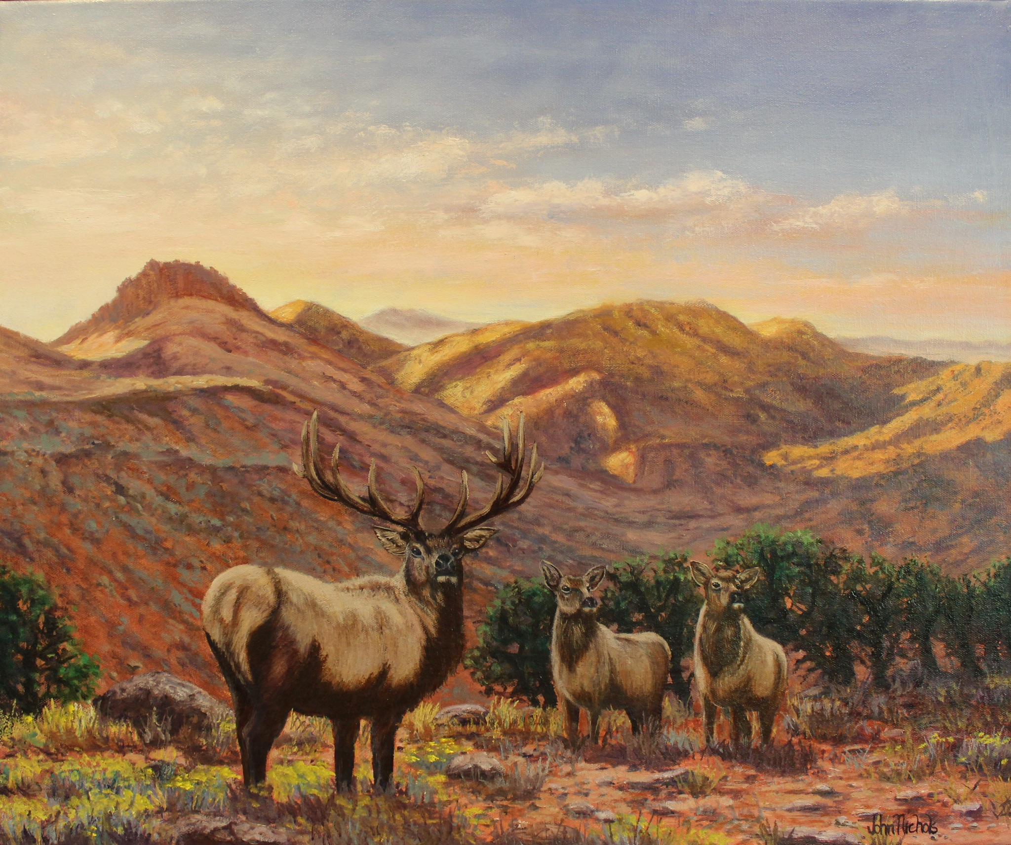 """Colorado Elk"""