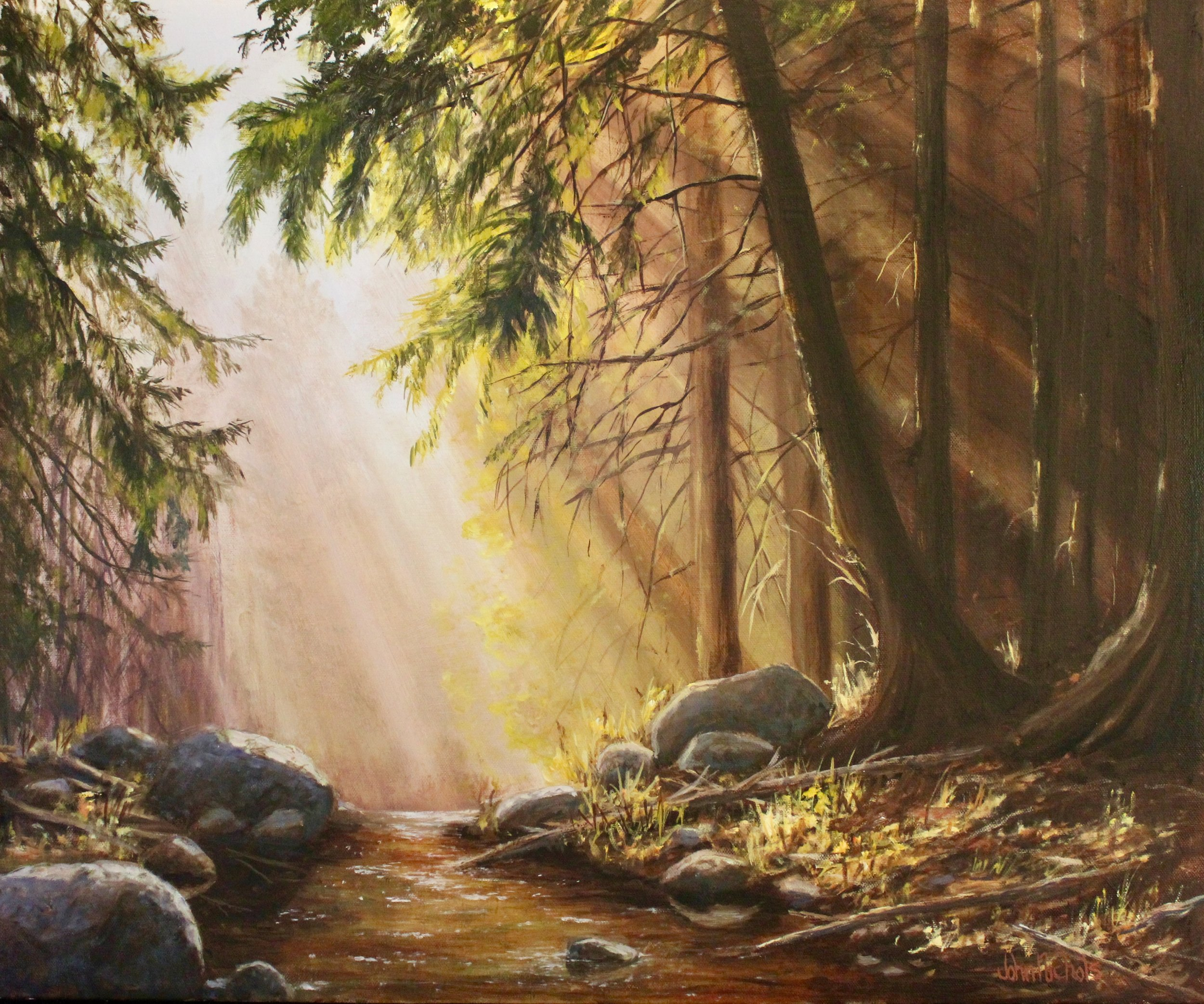 """Forest Morning"""