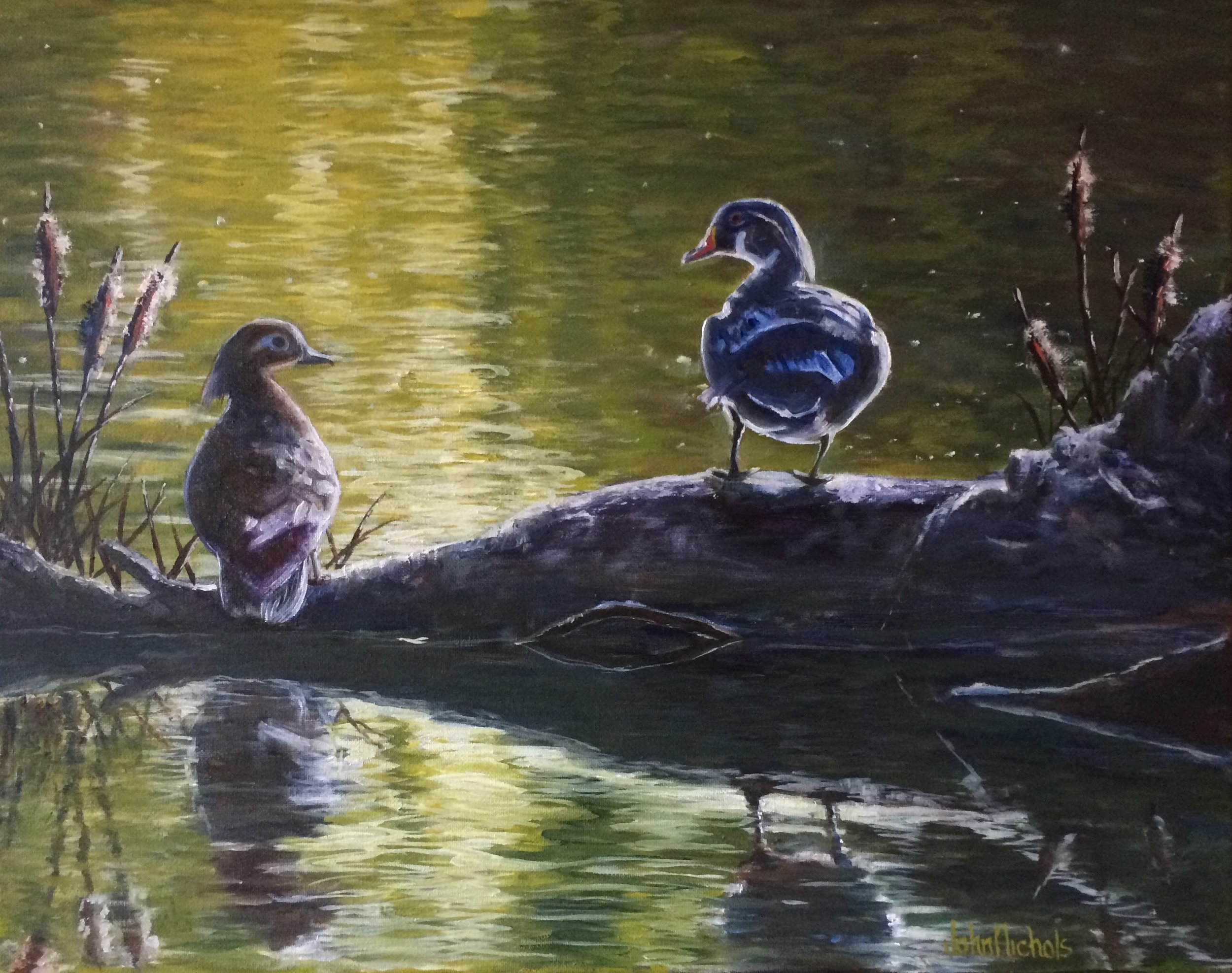 """A Pair of Wood Ducks"""