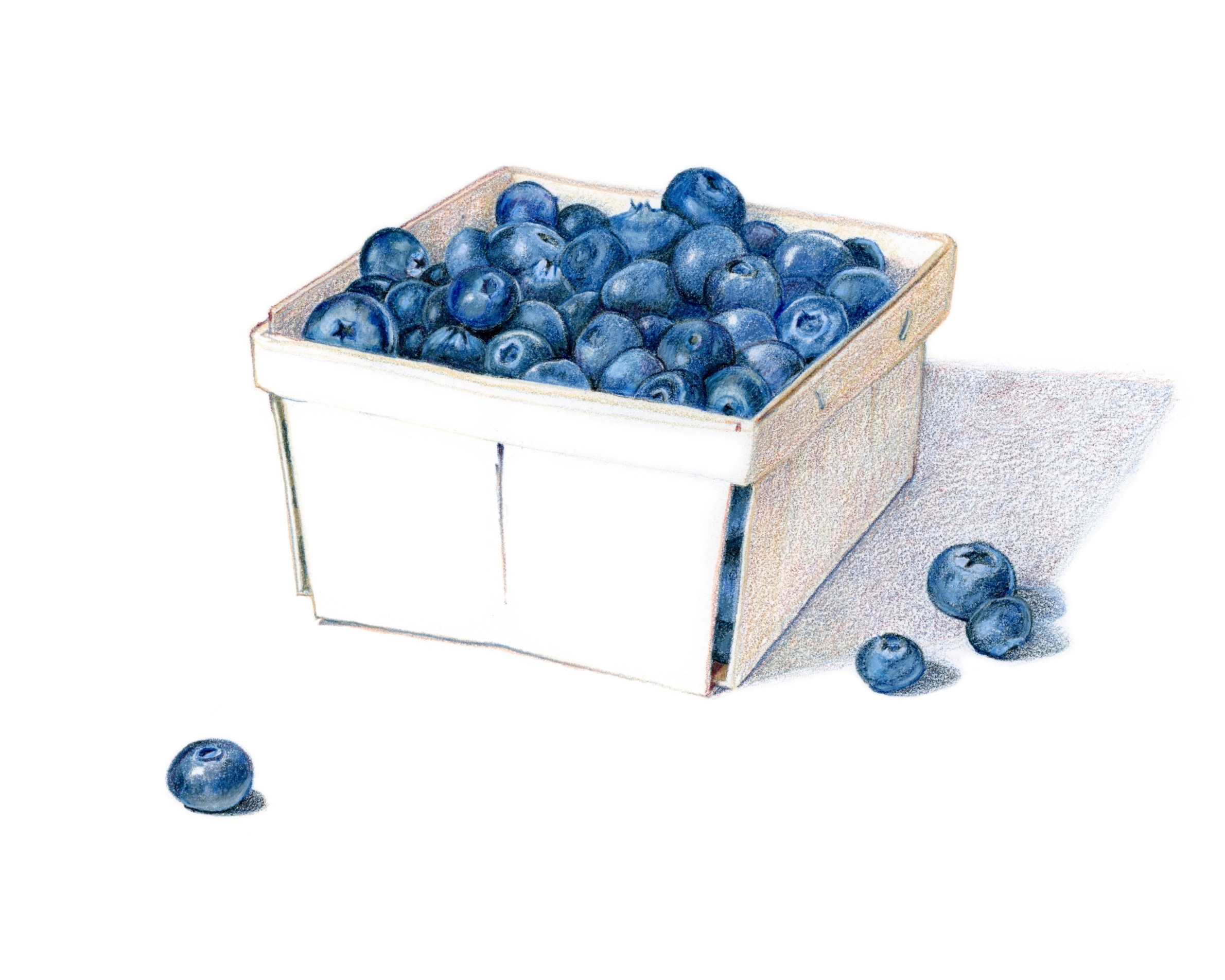 A basket of blueberries - Colored pencil