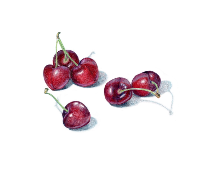 Bing cherries, colored pencil
