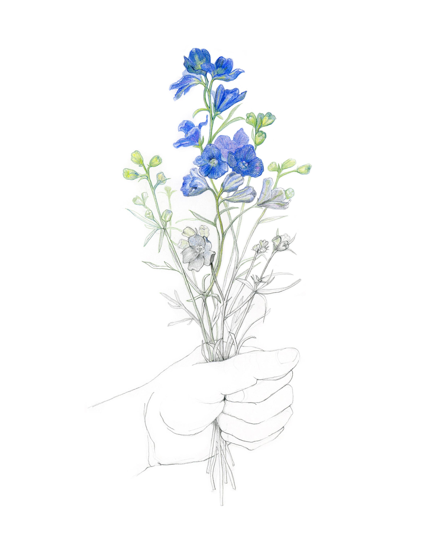 Delphinium bouquet, colored pencil & graphite