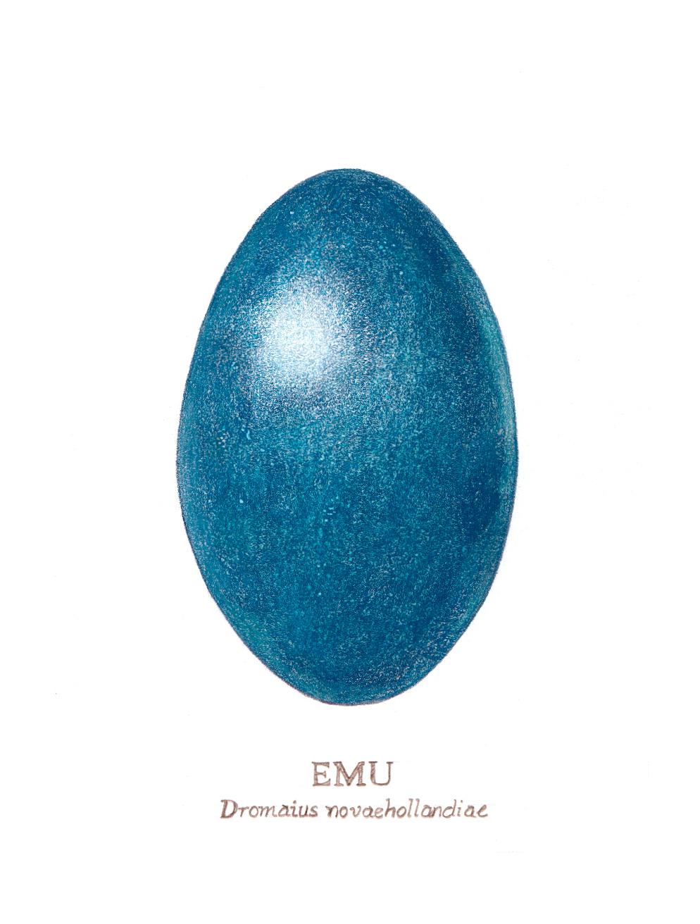 EmuEggNoOutline.jpg