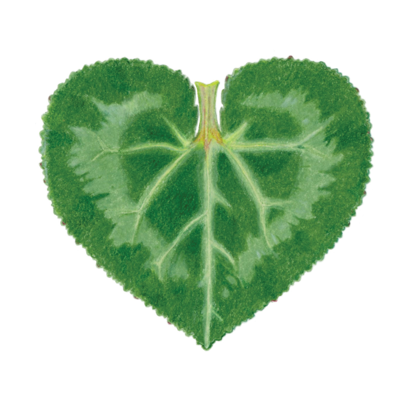 Heart_CyclamenLeaf001_crop.jpg