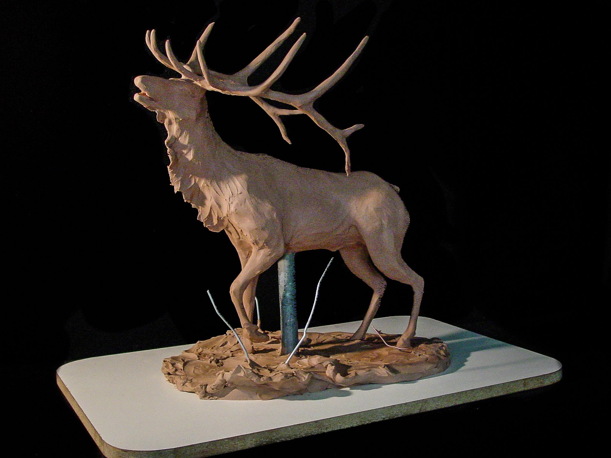 Elk-4.jpg