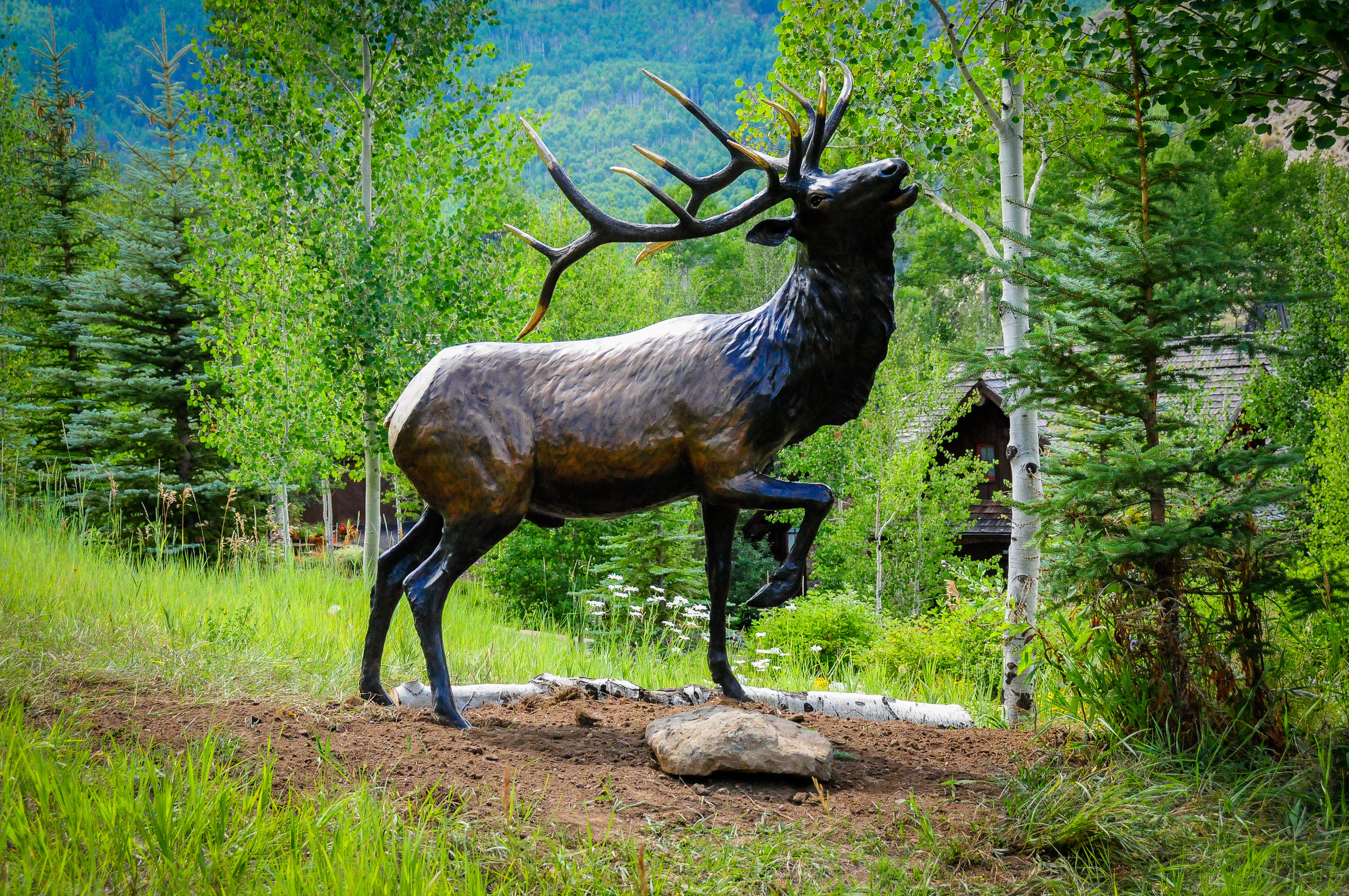 Elk-8.jpg