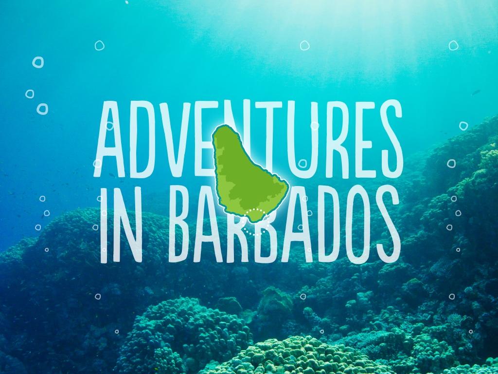 Zed's Snorkel Adventures