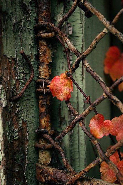 oldvines.jpg