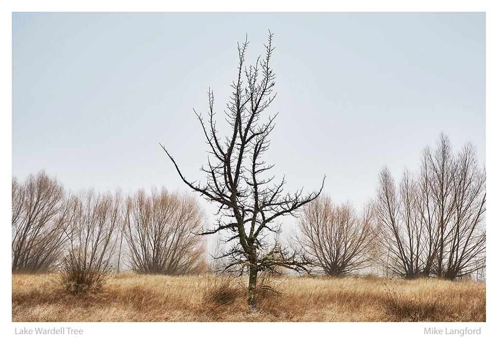 10-Lake-Wardell-Tree-Langford.jpg