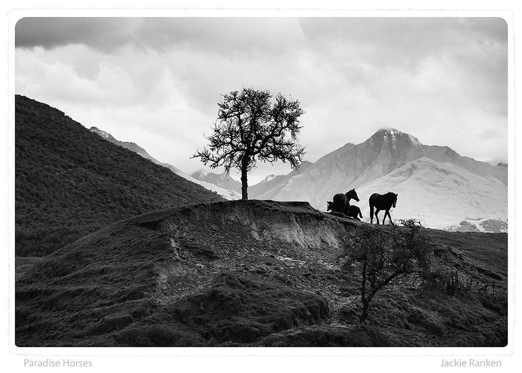 25-Paradise-Horses-Ranken.jpg
