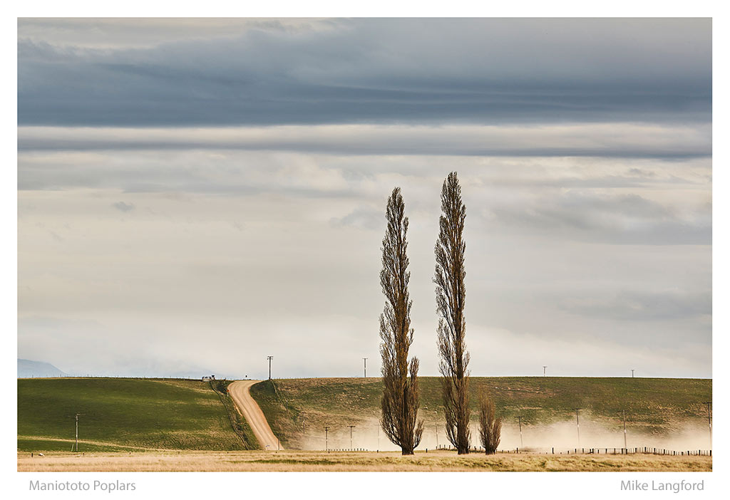 32-Maniototo-Poplars-Langford.jpg