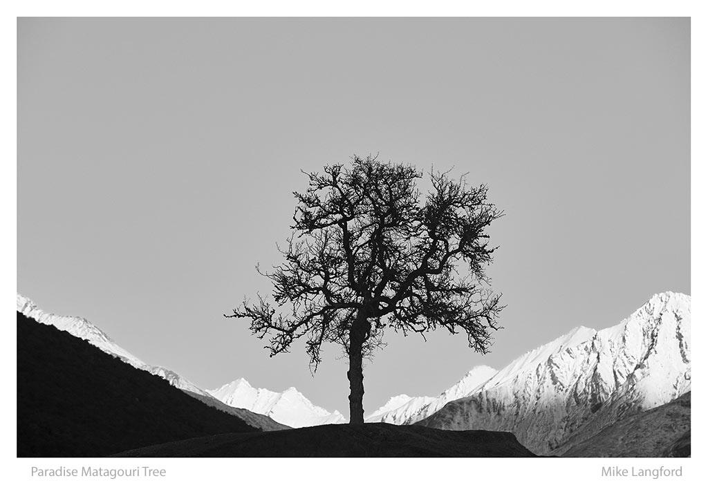 26-Paradise-Matagouri-Tree-Langford.jpg