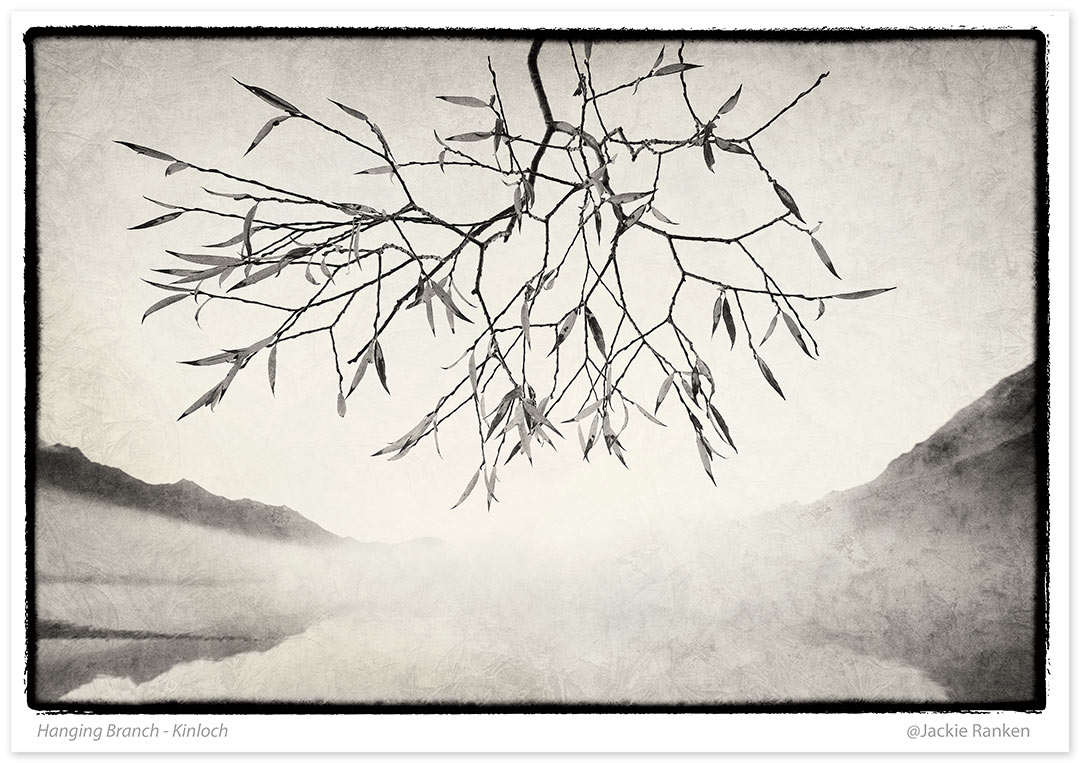 18-hanging-branch-47.jpg