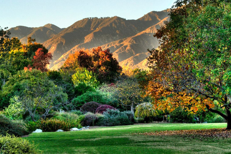 LA Arboretum Places To Go In LA Field.jpg