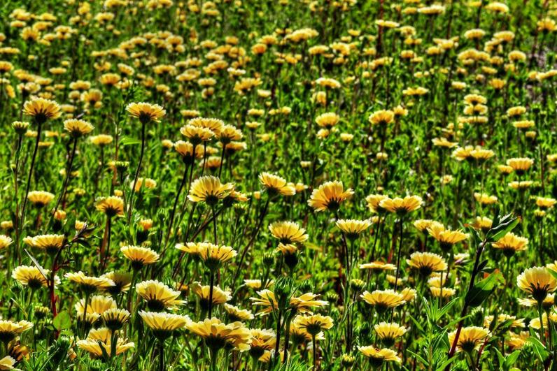 LA Arboretum Places To Go In LA Flower Field.jpg