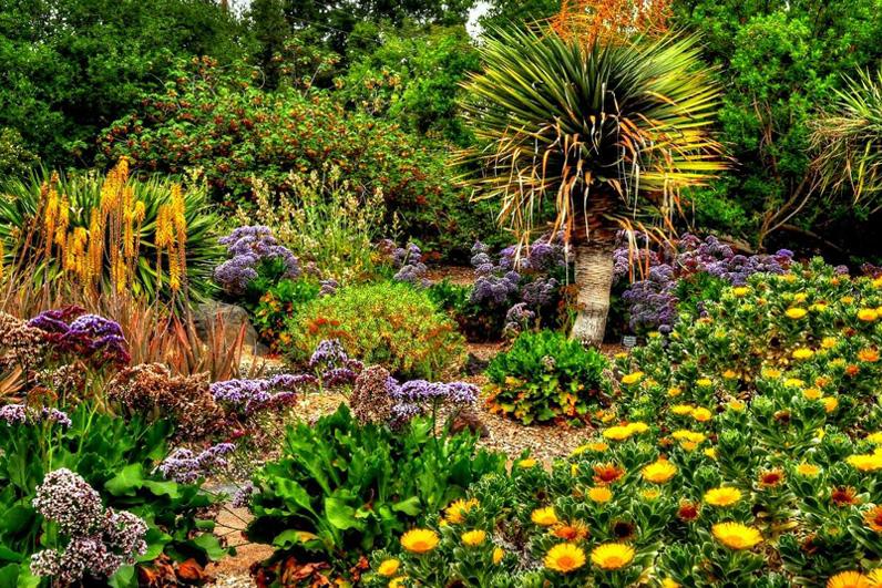 LA Arboretum Places To Go In LA Trees and Flowers.jpg