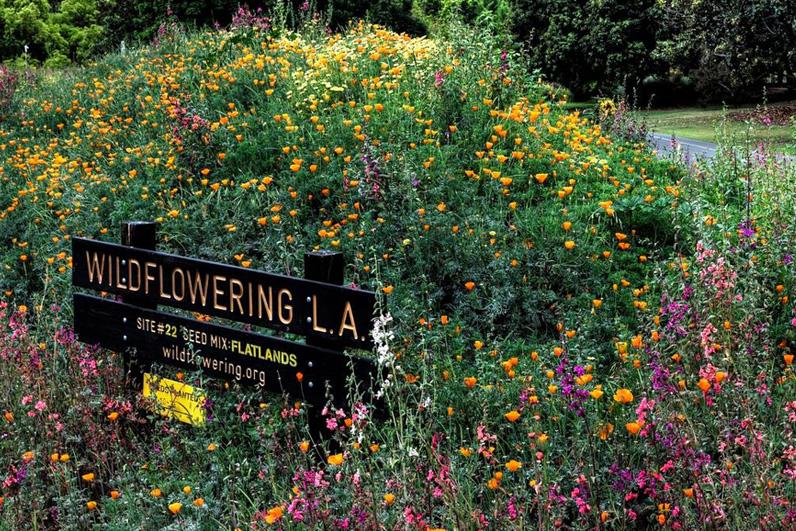 LA Arboretum Places To Go In LA Wildflowers.jpg