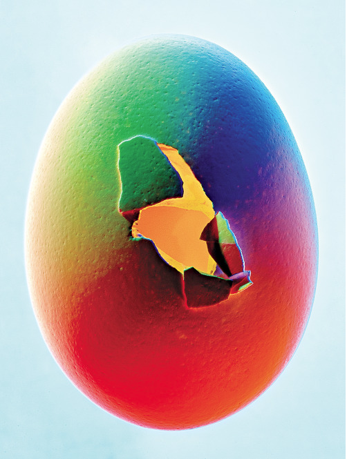 Feature, Bionic Eggs  Photograph by Bobby Doherty  New York Magazine