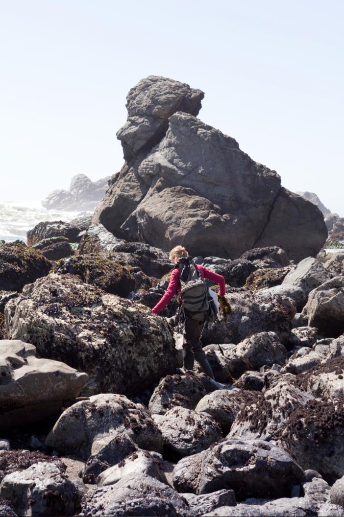 Seaweed forage, Strong Arm Farm  Goat Rock Beach, California  Photograph by Jason Lecras