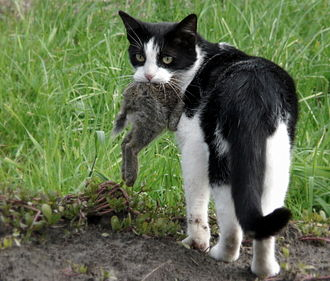 A feral cat with prey.