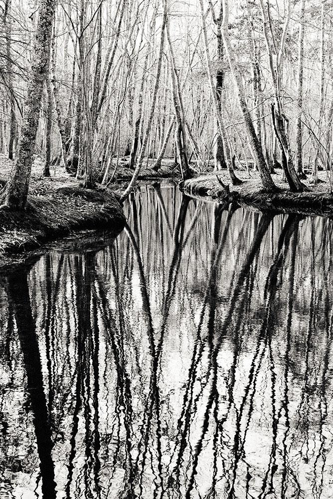 """Photo by Audrey Monahan, in """"Making Marks,'' a current show featuring female artists hosted by the Providence Art Club."""