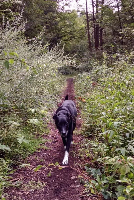 The late Maverick, the half Lab and half border collie of Peter Alpers, of Alpers Fine Art, Andover, Mass. Mr, Alpers is setting aside a percentage of all sales until the end of May to the Northeast Animal Shelter, in Salem, Mass., in memory of Maverick.
