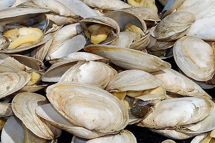 Steamers photographed in Gloucester, Mass.