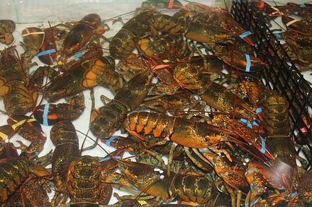 lobsters2.JPG