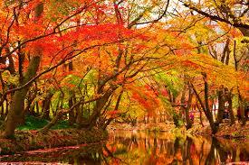 Maple_Trees_by_Creek.jpg