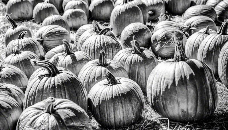 """""""Pumpkin Patch'', by Bobby Baker. (Copyright Bobby Baker Fine Art)."""