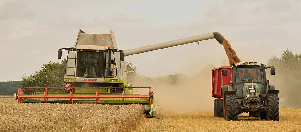 Unload_wheat_by_the_combine_Claas_Lexion_584.jpg