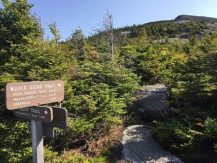 On Vermont's Mt. Mansfield