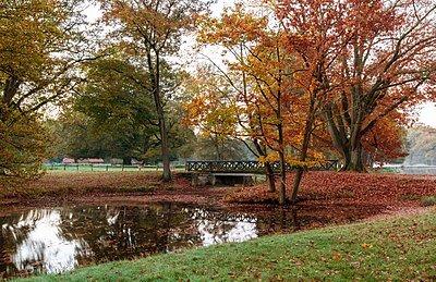 400px-Dülmen,_Wildpark_--_2014_--_3808_color_balanced.jpg