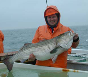 Researcher with a striped bass